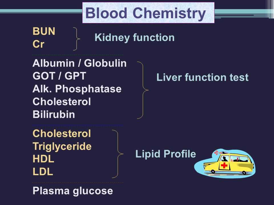 Blood Chemistry BUN Cr Kidney function Albumin / Globulin GOT / GPT