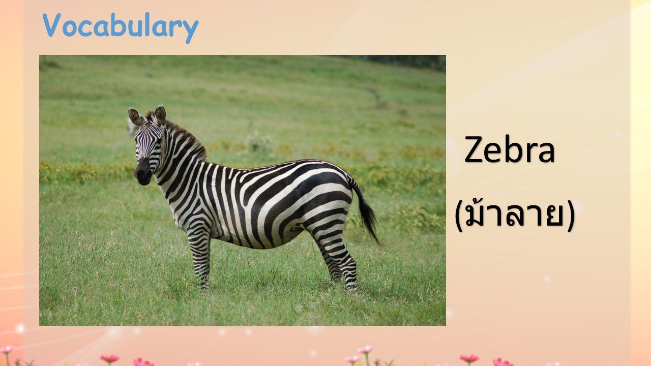 Vocabulary Zebra (ม้าลาย)
