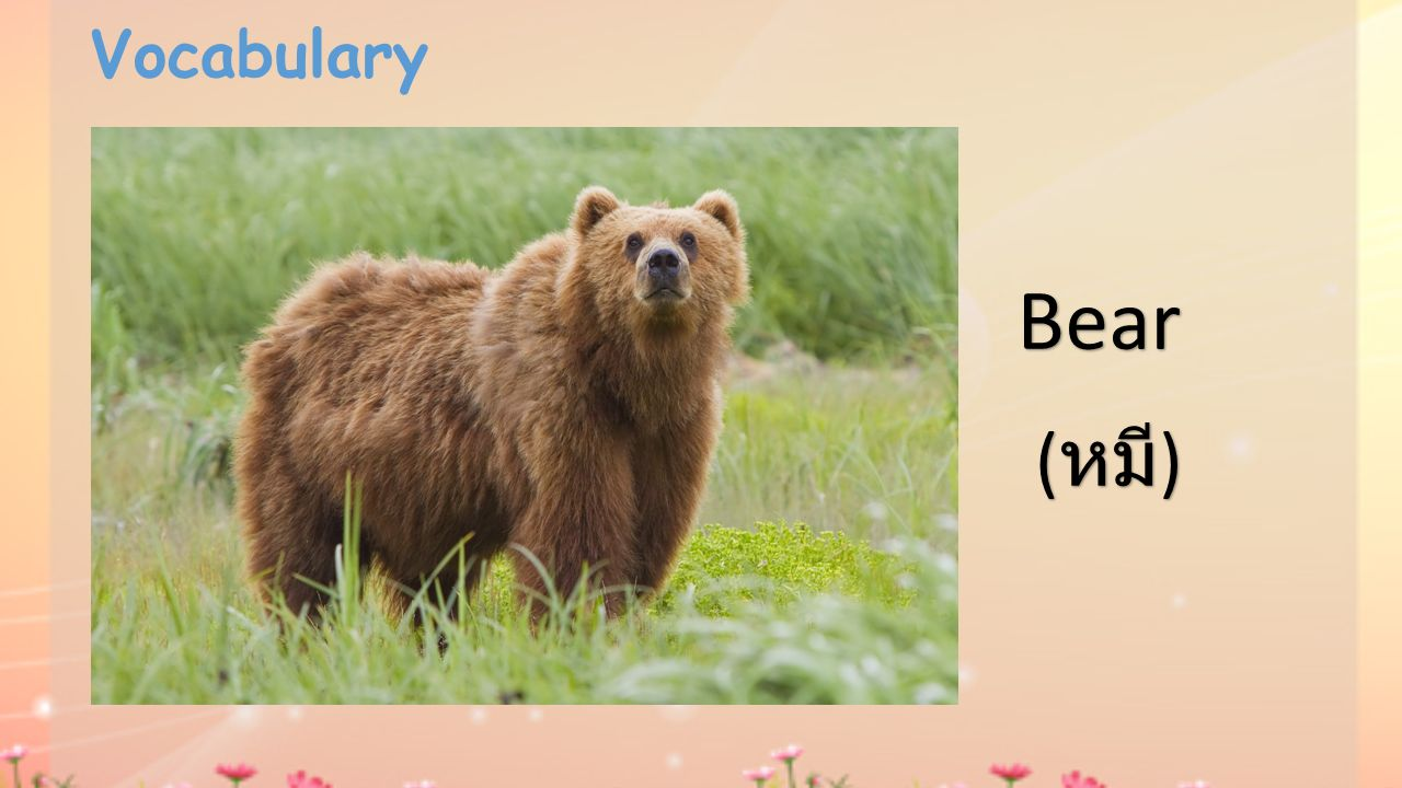 Vocabulary Bear (หมี)