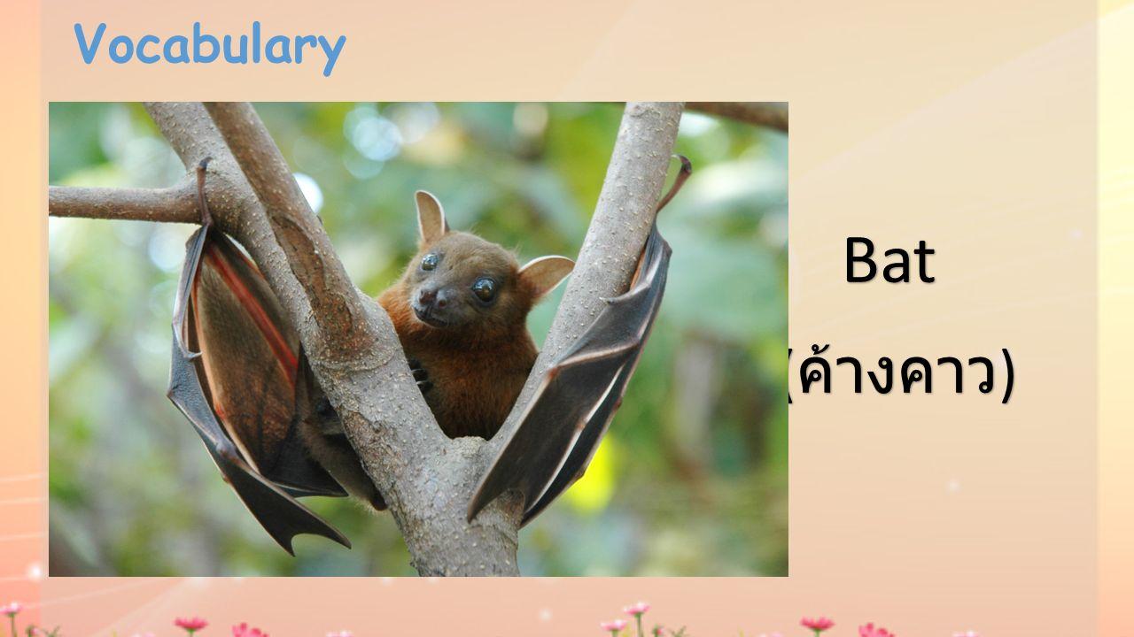 Vocabulary Bat (ค้างคาว)