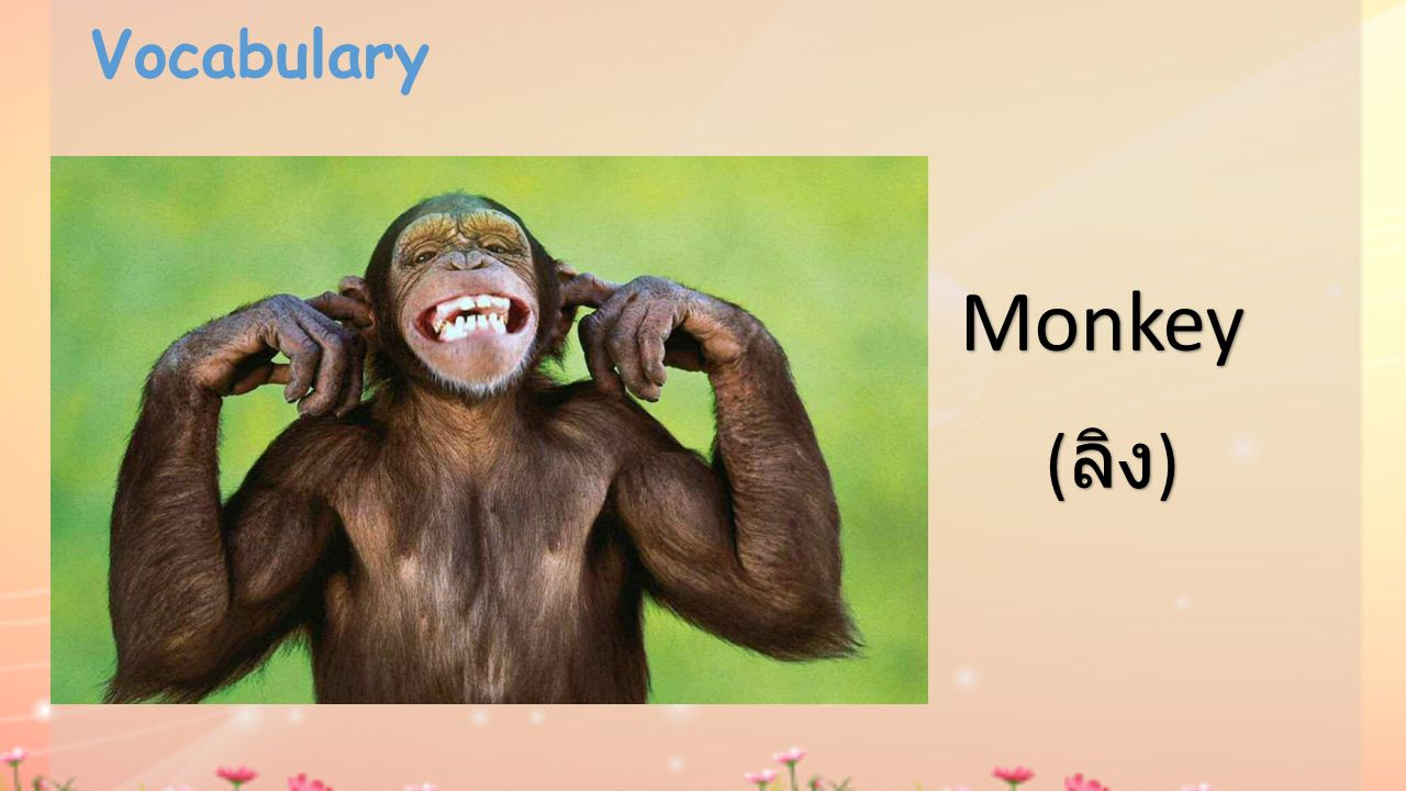 Vocabulary Monkey (ลิง)