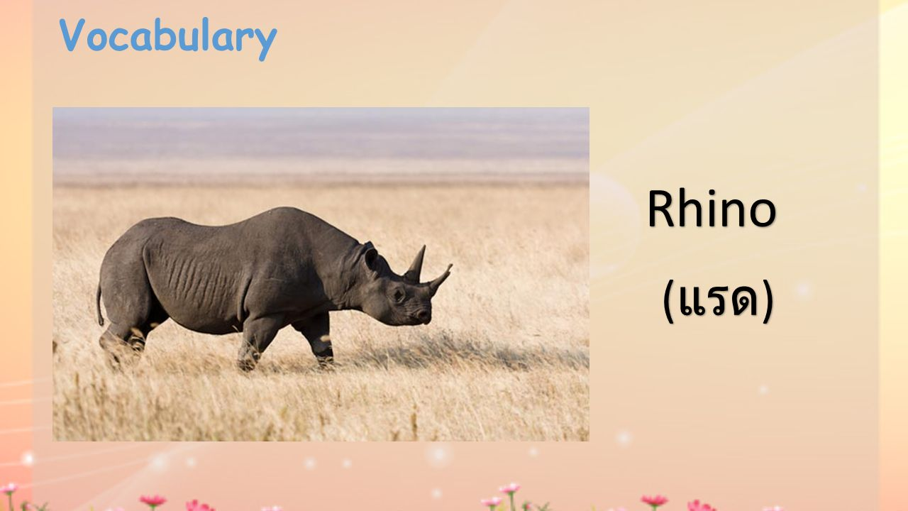 Vocabulary Rhino (แรด)