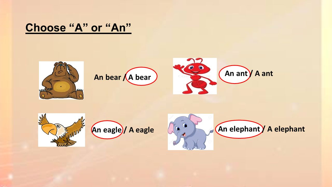 Choose A or An An ant / A ant An bear / A bear