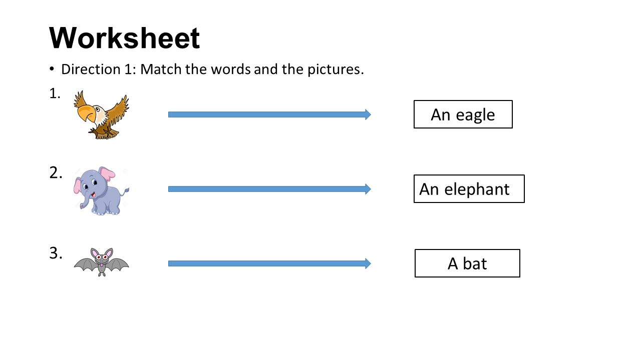 Worksheet An eagle 2. 3. An elephant A bat