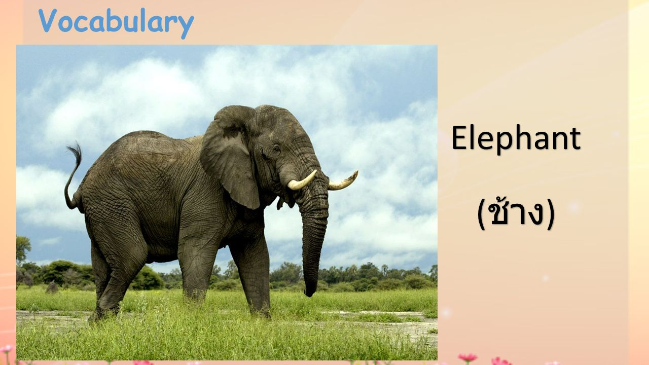 Vocabulary Elephant (ช้าง)