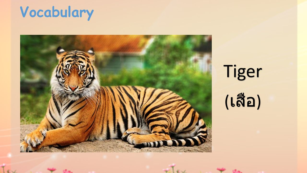 Vocabulary Tiger (เสือ)