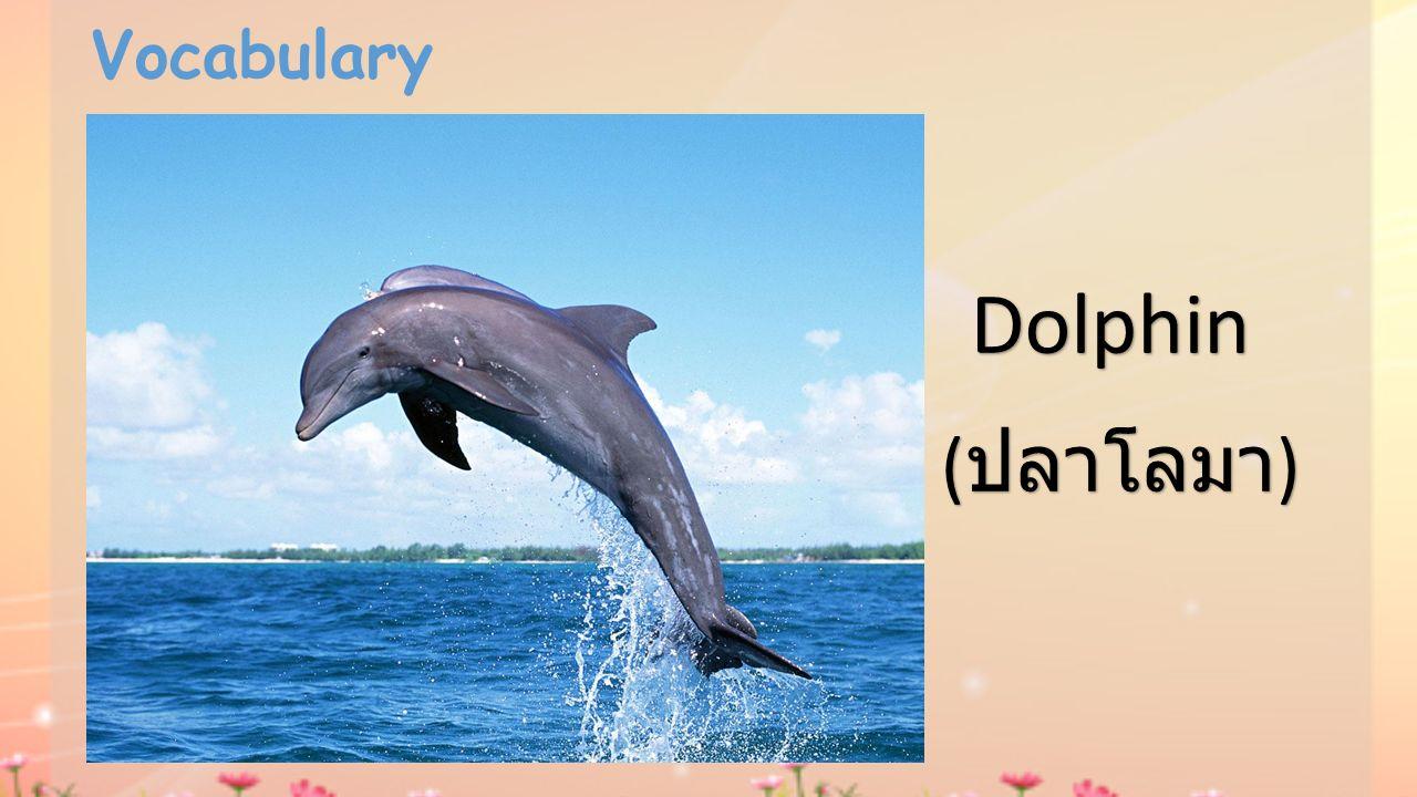 Vocabulary Dolphin (ปลาโลมา)