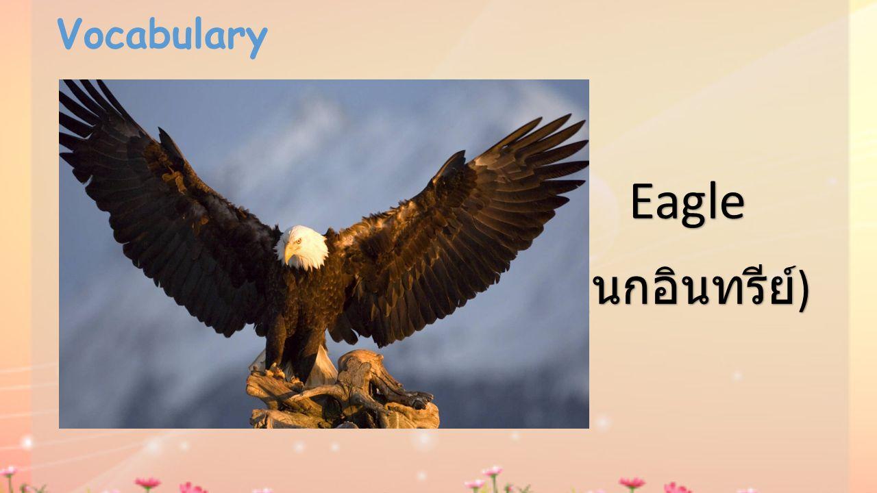 Vocabulary Eagle (นกอินทรีย์)