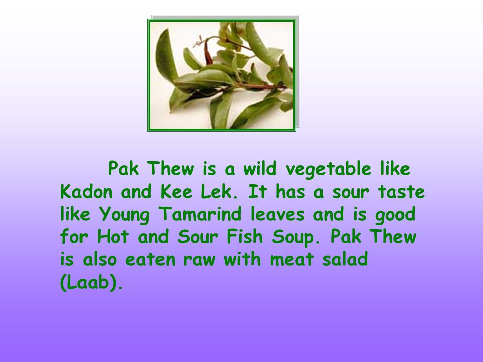 Pak Thew is a wild vegetable like Kadon and Kee Lek