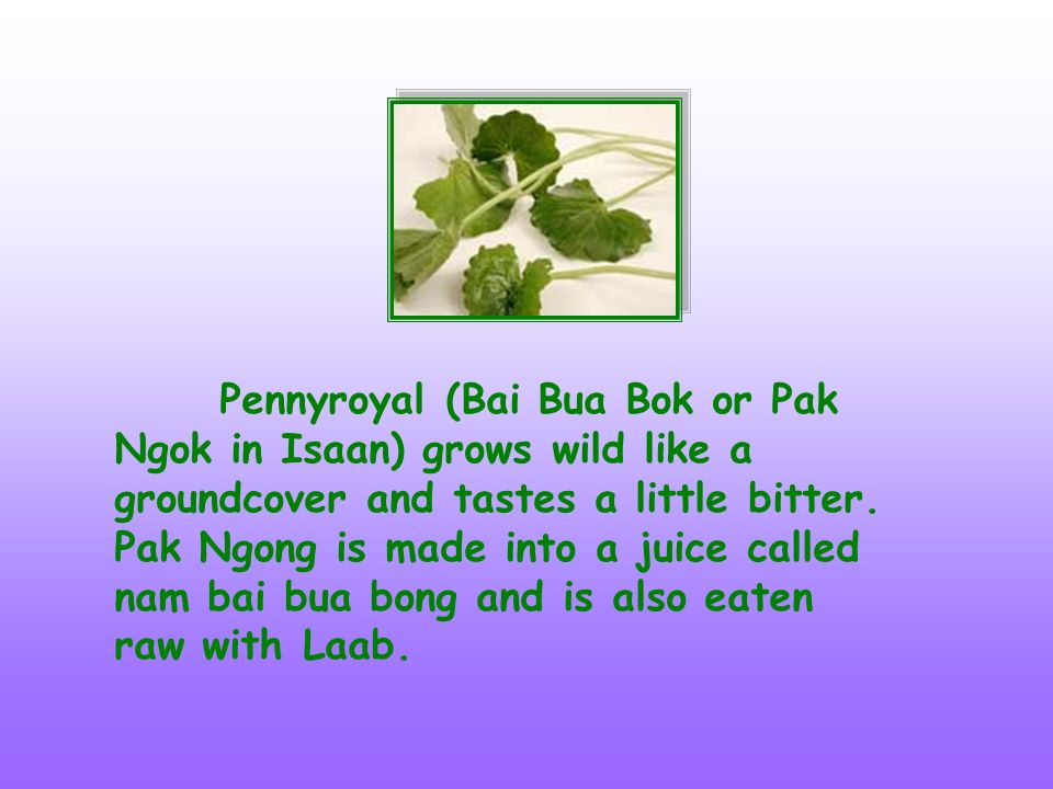 Pennyroyal (Bai Bua Bok or Pak Ngok in Isaan) grows wild like a groundcover and tastes a little bitter.