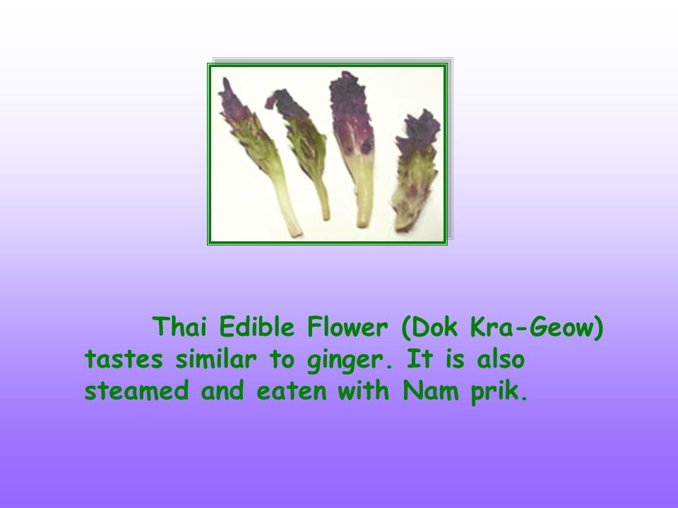 Thai Edible Flower (Dok Kra-Geow) tastes similar to ginger