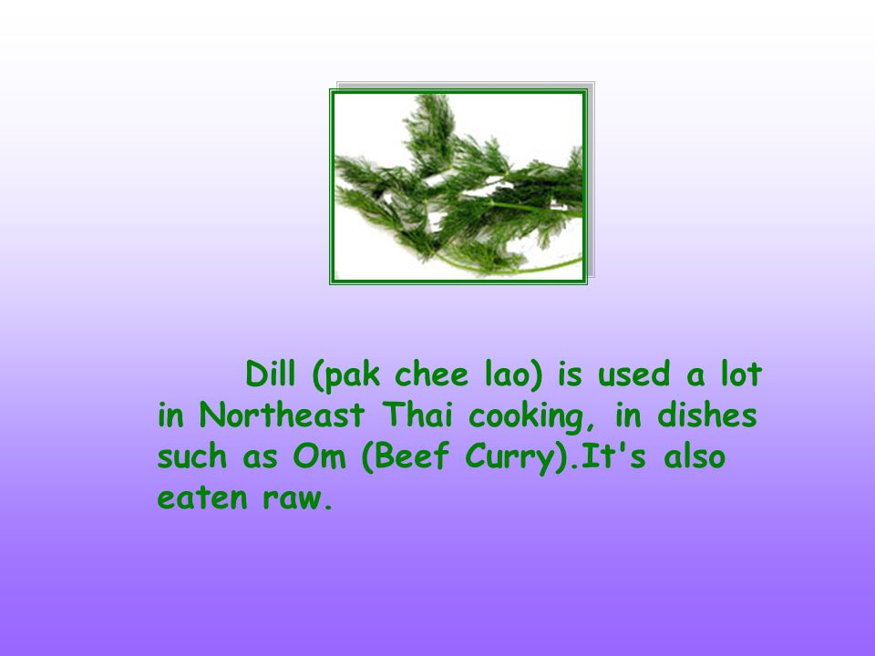 Dill (pak chee lao) is used a lot in Northeast Thai cooking, in dishes such as Om (Beef Curry).It s also eaten raw.