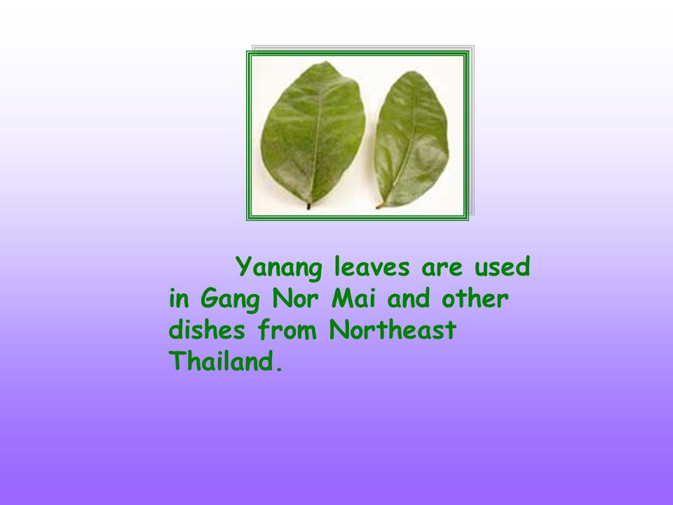 Yanang leaves are used in Gang Nor Mai and other dishes from Northeast Thailand.