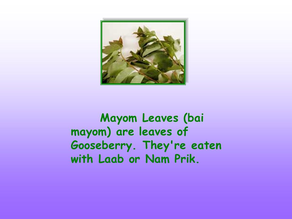Mayom Leaves (bai mayom) are leaves of Gooseberry