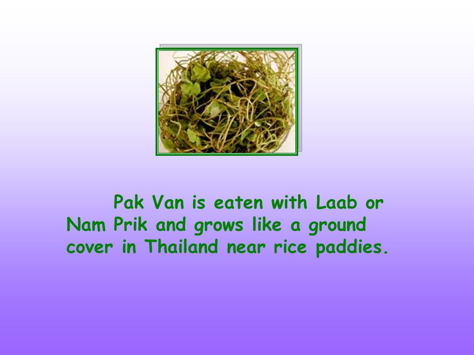 Pak Van is eaten with Laab or Nam Prik and grows like a ground cover in Thailand near rice paddies.