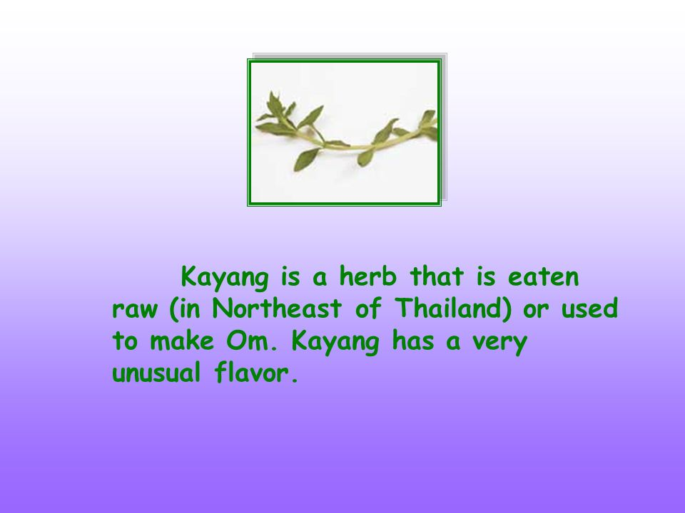 Kayang is a herb that is eaten raw (in Northeast of Thailand) or used to make Om.