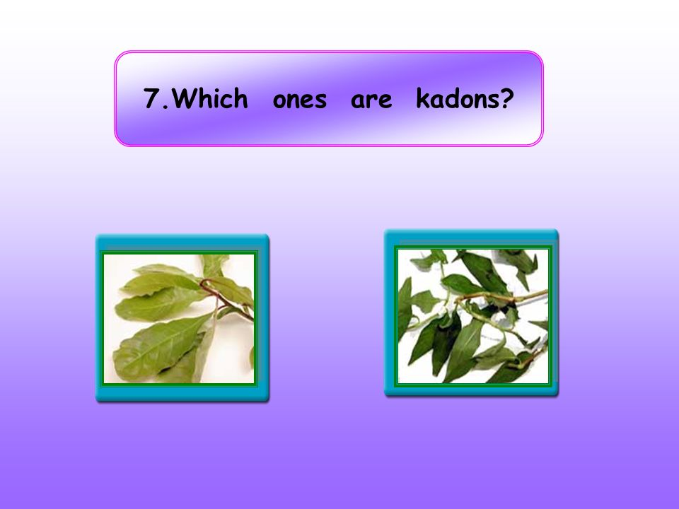 7.Which ones are kadons False