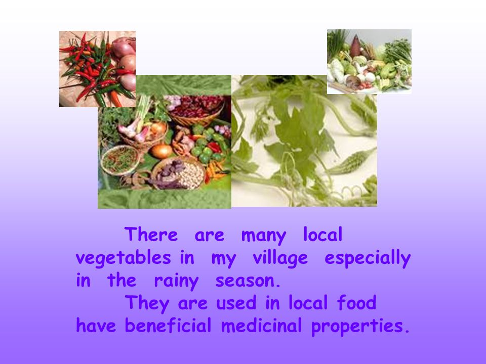 There are many local vegetables in my village especially in the rainy season.