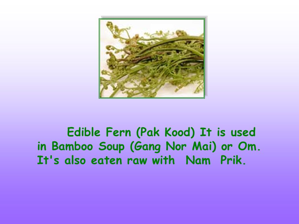 Edible Fern (Pak Kood) It is used in Bamboo Soup (Gang Nor Mai) or Om