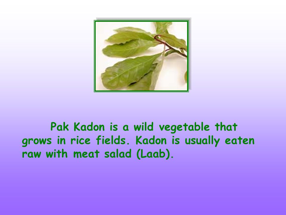 Pak Kadon is a wild vegetable that grows in rice fields