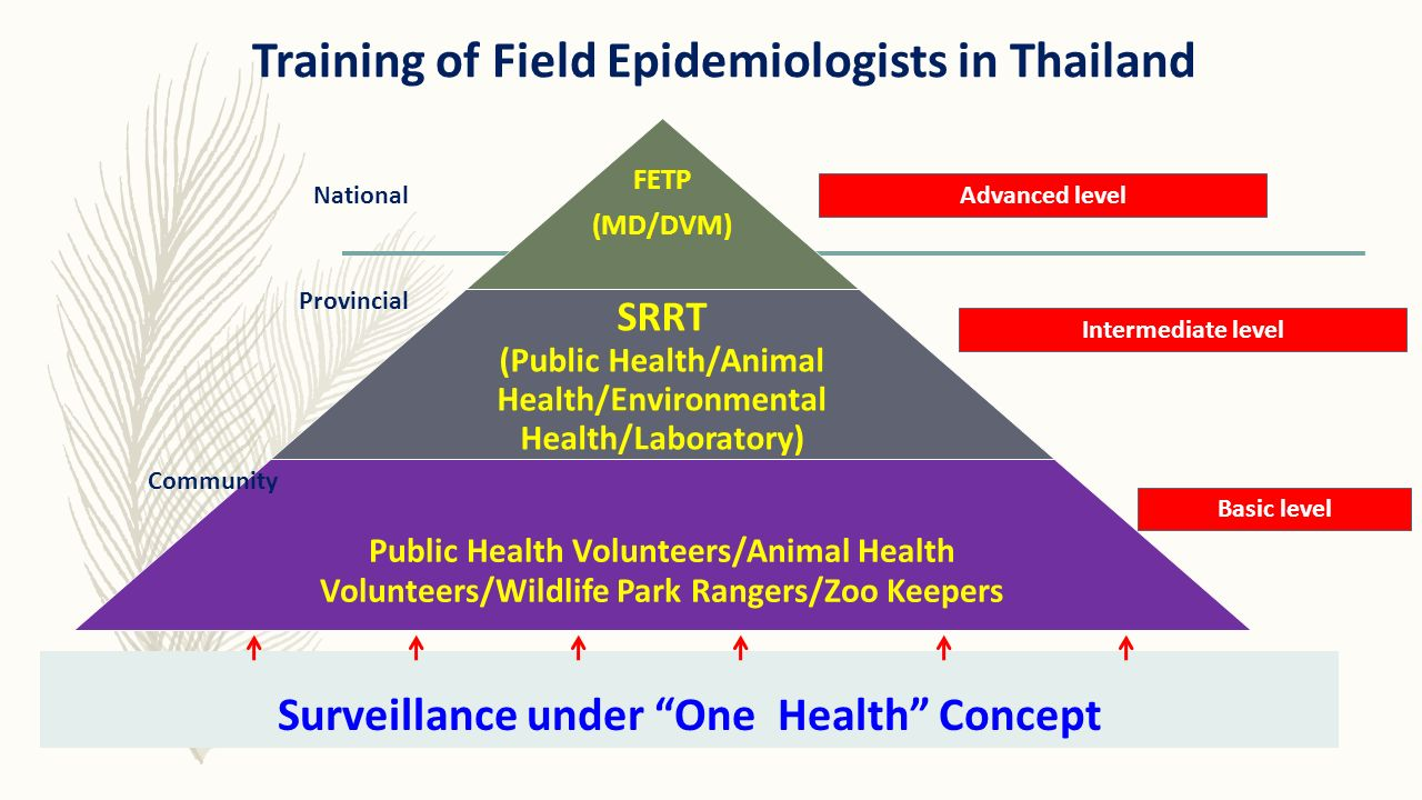Training of Field Epidemiologists in Thailand