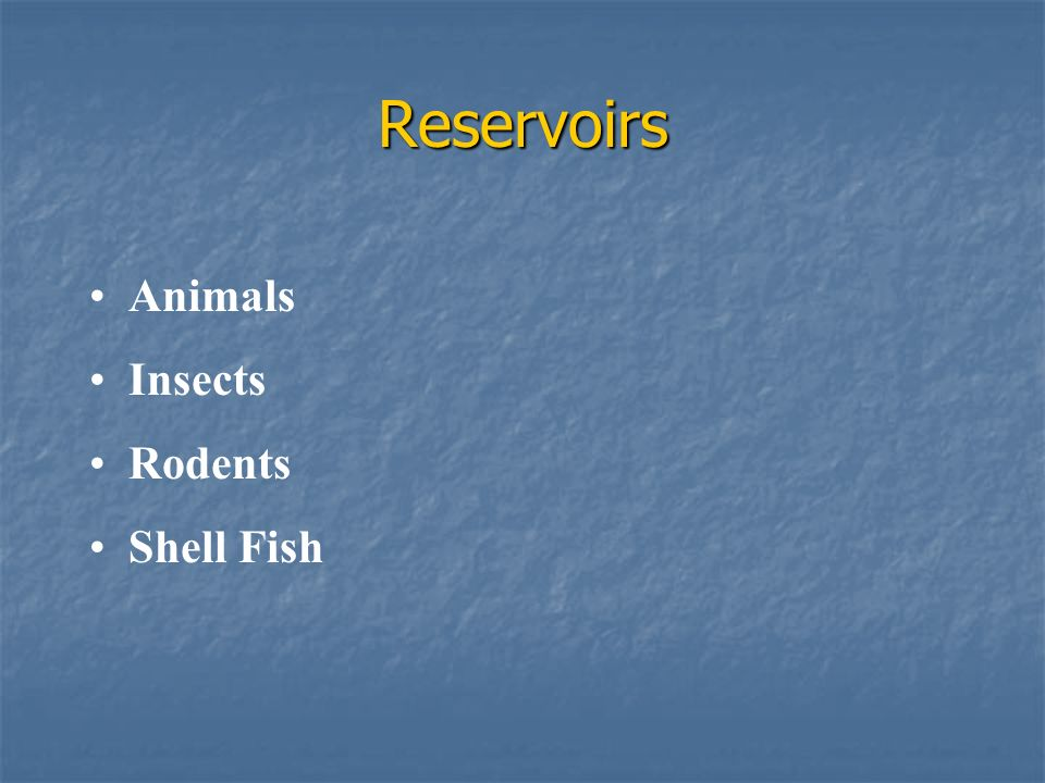 Reservoirs Animals Insects Rodents Shell Fish