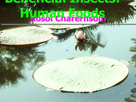Kosol Charernsom Beneficial Insects: Human Foods.