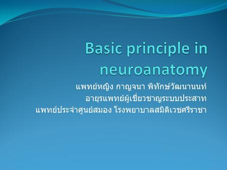 Basic principle in neuroanatomy