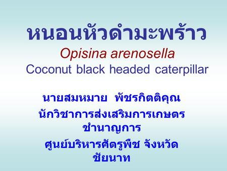 หนอนหัวดำมะพร้าว Opisina arenosella Coconut black headed caterpillar