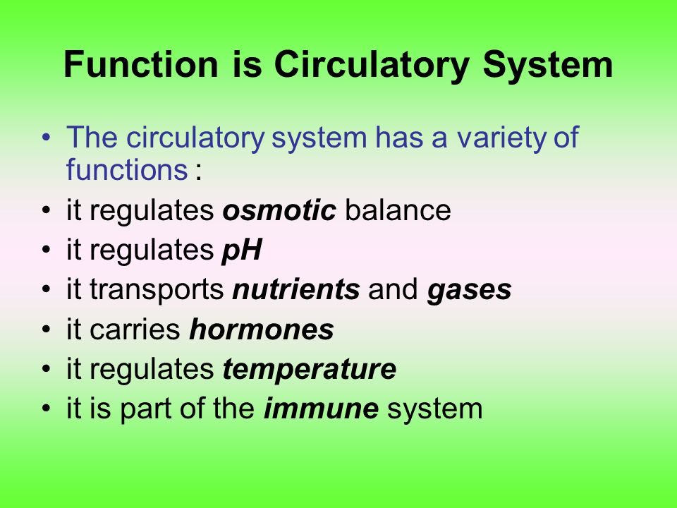 Function is Circulatory System