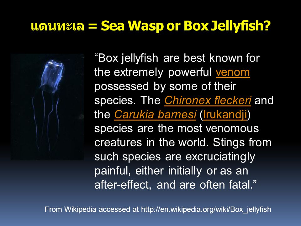 แตนทะเล = Sea Wasp or Box Jellyfish