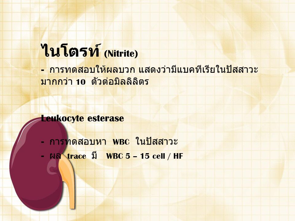 ไนโตรท์ (Nitrite) Leukocyte esterase