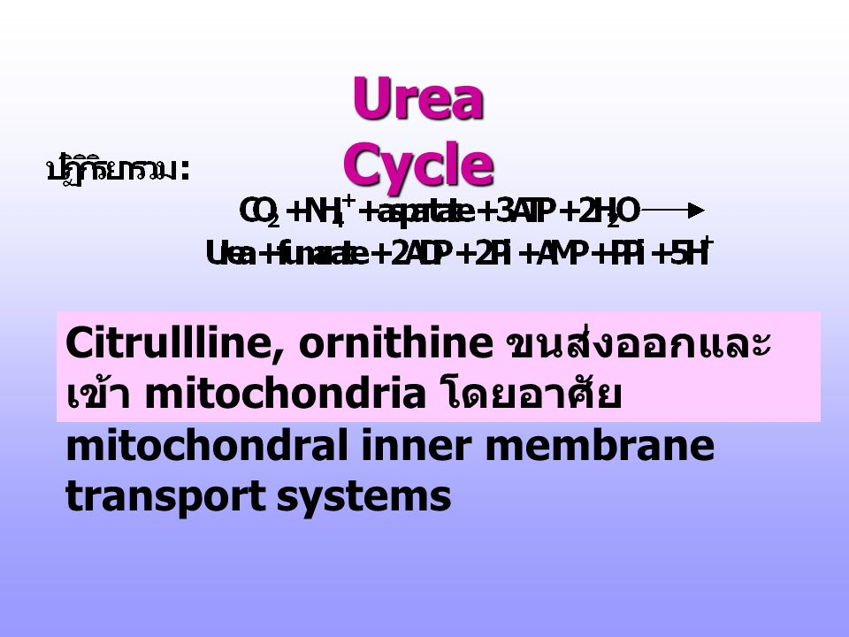 Urea Cycle Citrullline, ornithine ขนส่งออกและเข้า mitochondria โดยอาศัย mitochondral inner membrane transport systems.