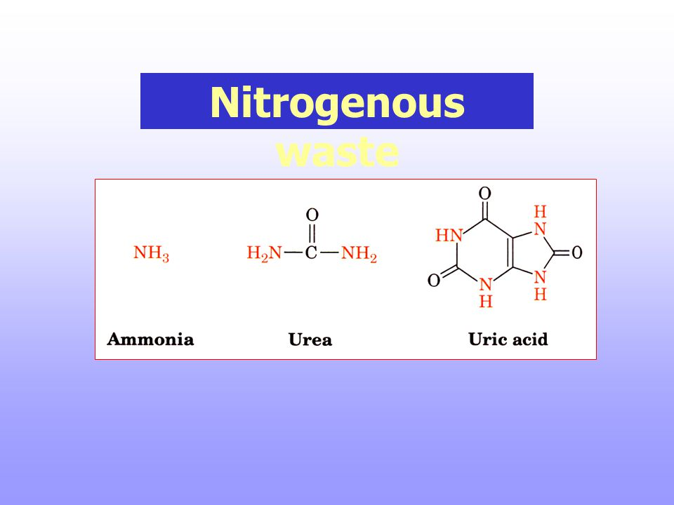 Nitrogenous waste