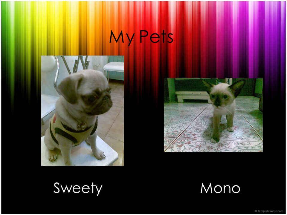 My Pets Sweety Mono
