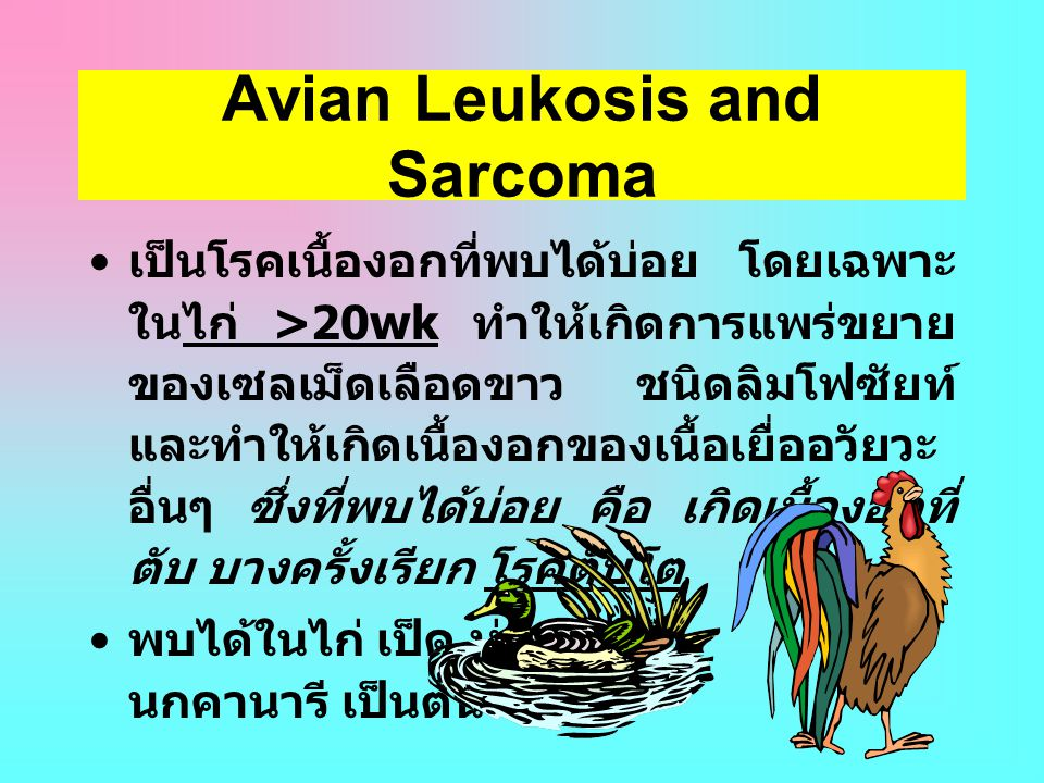 Avian Leukosis and Sarcoma