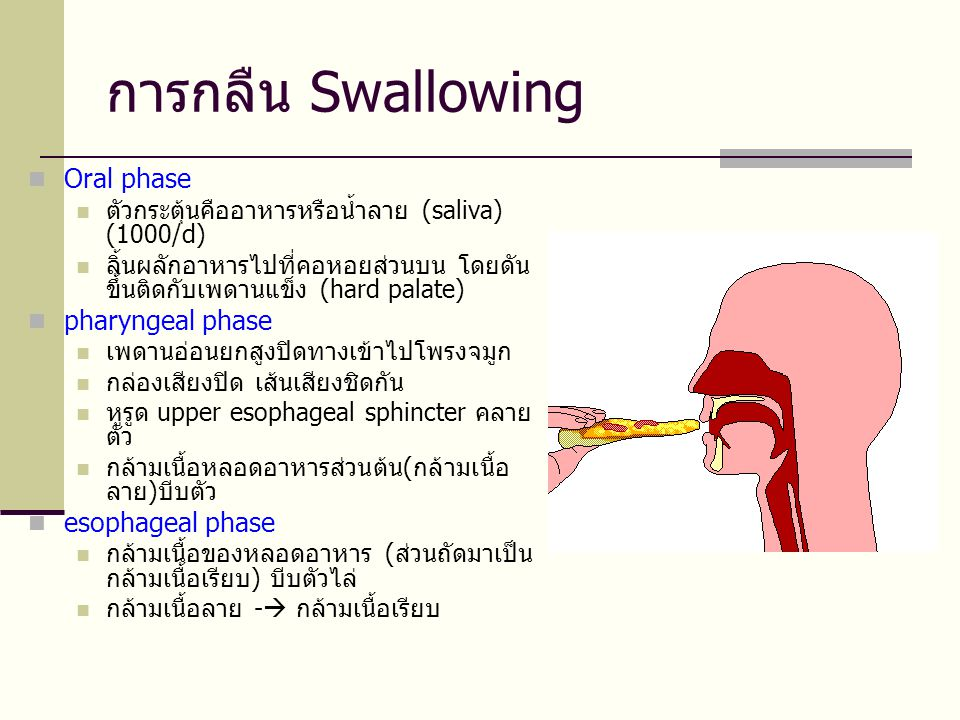 การกลืน Swallowing Oral phase pharyngeal phase esophageal phase