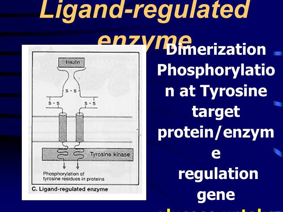 Ligand-regulated enzyme