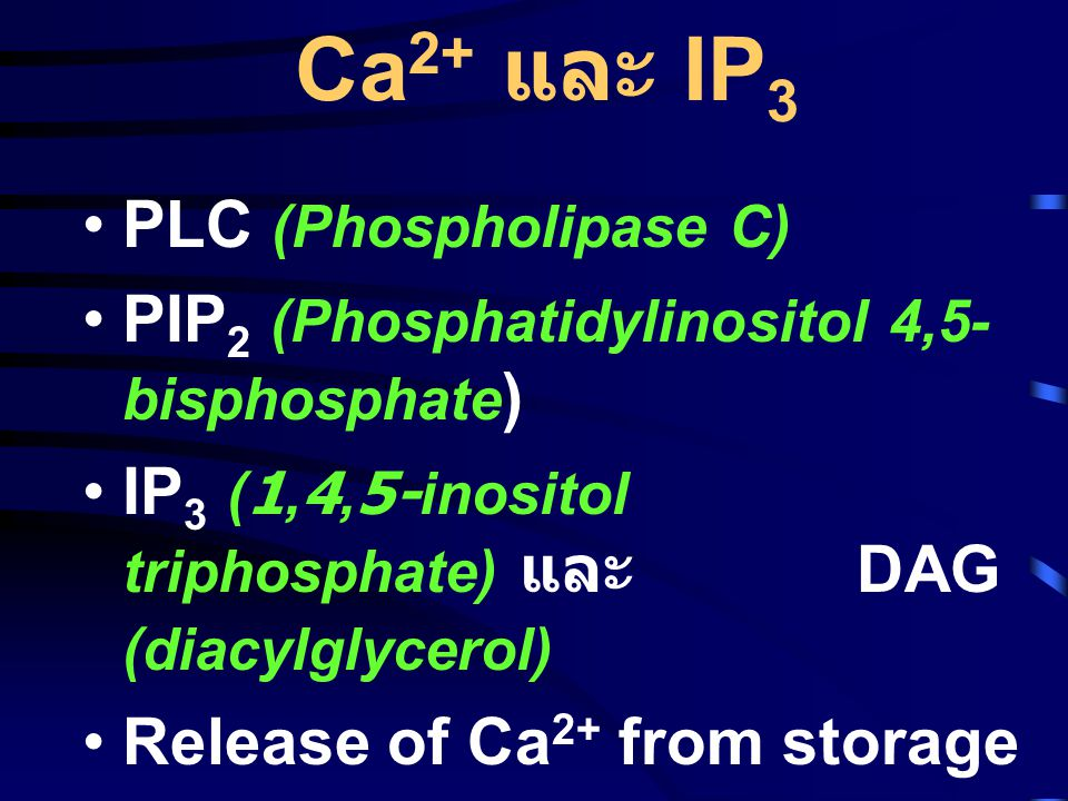 Ca2+ และ IP3 PLC (Phospholipase C)