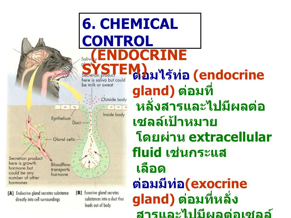 6. CHEMICAL CONTROL (ENDOCRINE SYSTEM)