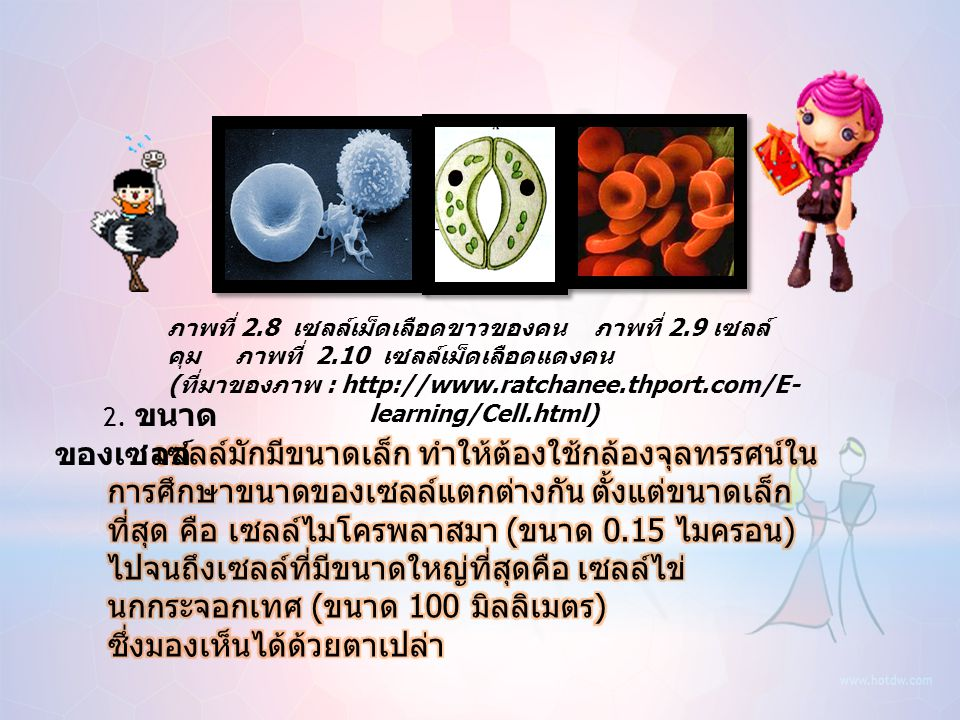 (ที่มาของภาพ : http://www.ratchanee.thport.com/E-learning/Cell.html)