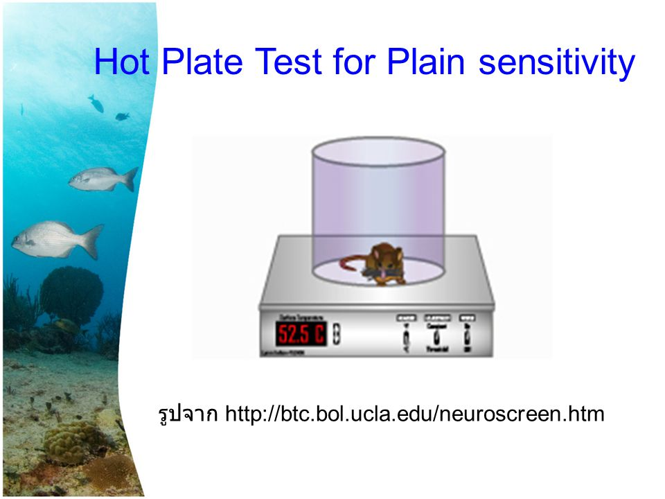 Hot Plate Test for Plain sensitivity