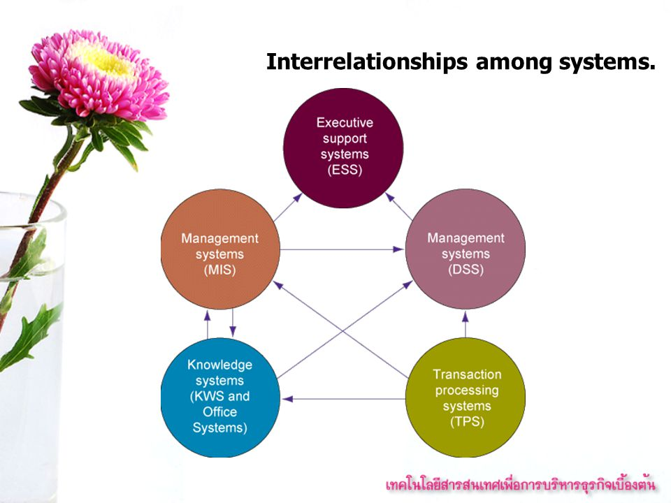Interrelationships among systems.