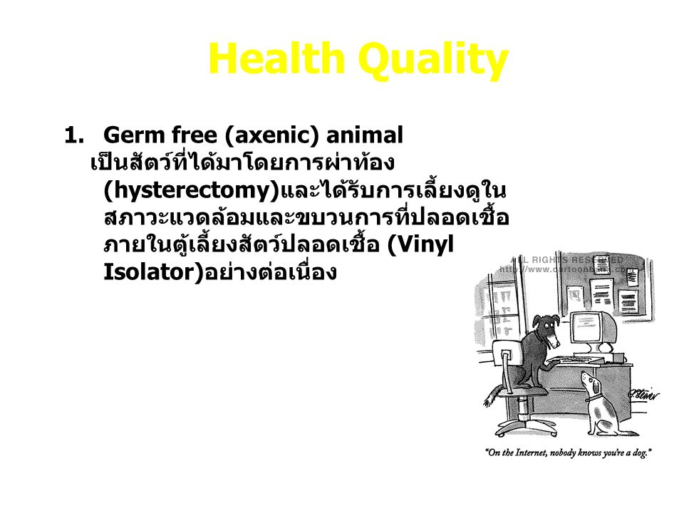 Health Quality Germ free (axenic) animal