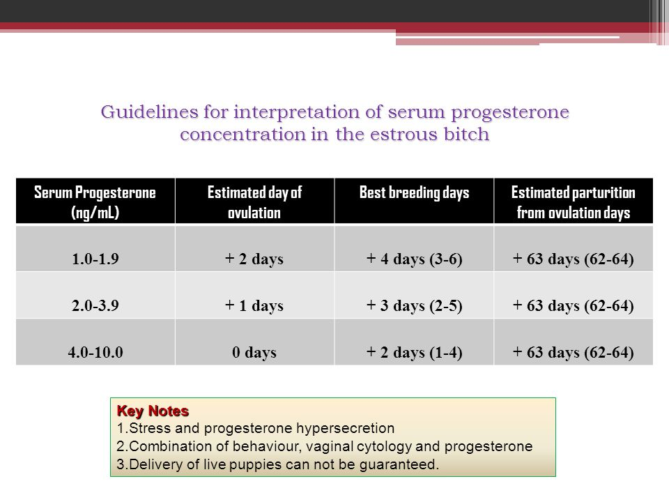 Guidelines for interpretation of serum progesterone concentration in the estrous bitch