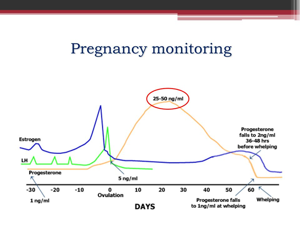Pregnancy monitoring