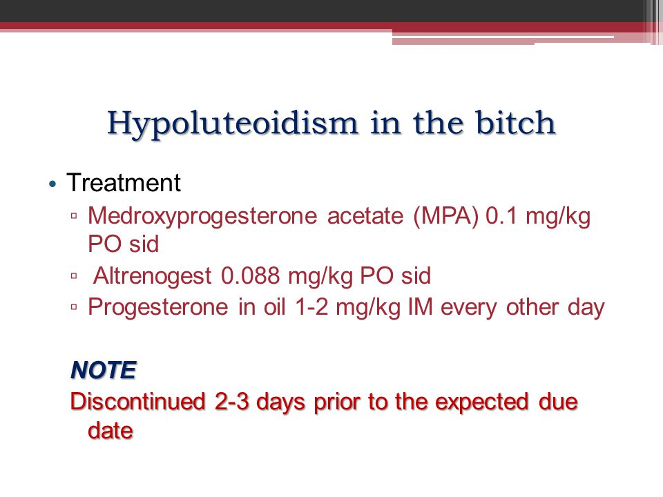 Hypoluteoidism in the bitch