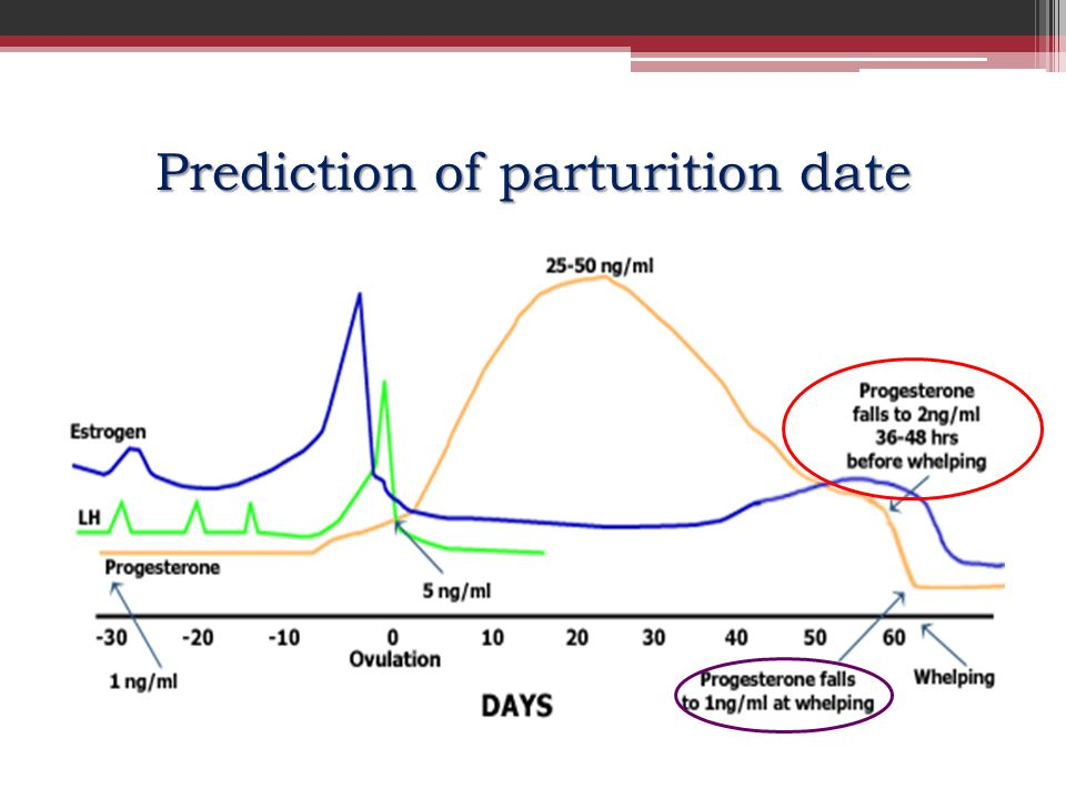 Prediction of parturition date