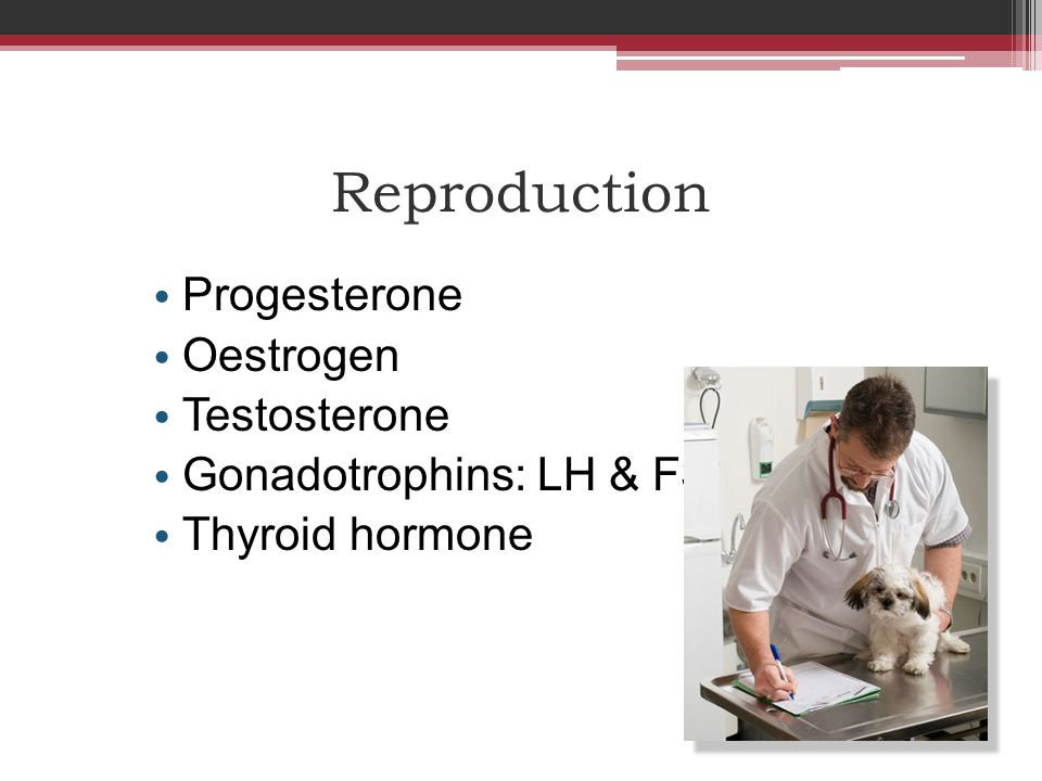 Reproduction Progesterone Oestrogen Testosterone