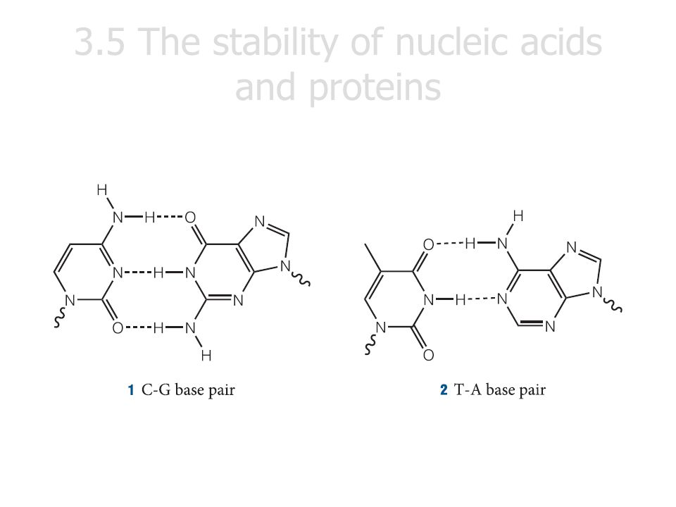 3.5 The stability of nucleic acids and proteins